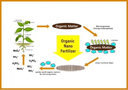 Nanofertilizer and microorganisms