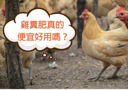 便宜好用的雞糞肥,真的便宜好用嗎?