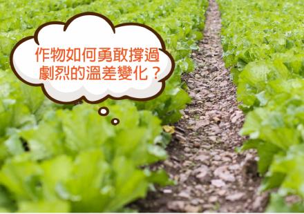 劇烈溫差時,根系培養的重要性