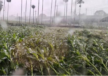 大雨淹水過後的田區管理