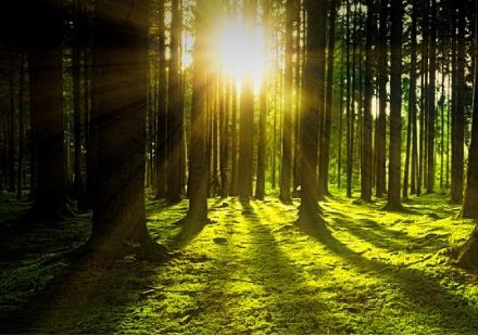 只需要陽光和水,作物就能健康成長嗎?